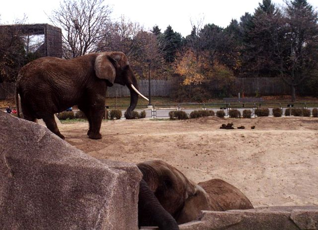 Milwaukee County Zoo - Best Outdoor Activities for Families in Wisconsin