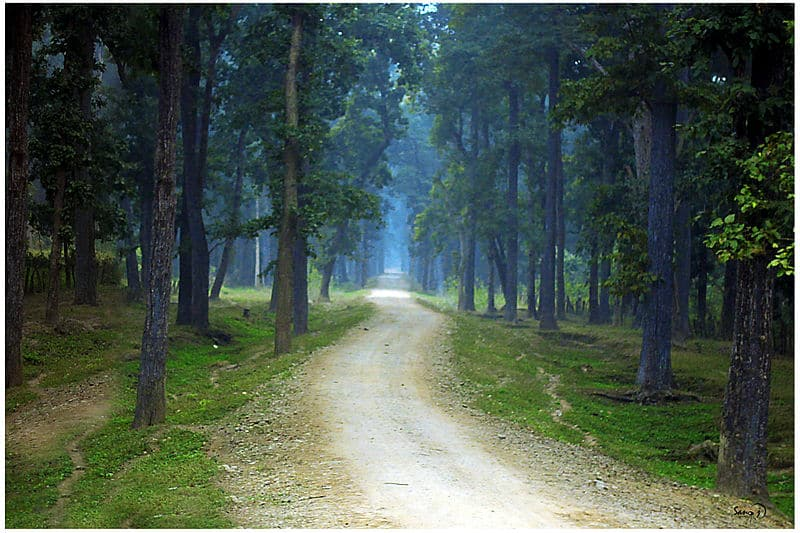 Bardiya National Park - Best Things to Do in Nepal