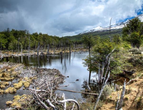 Tierra de, Fuego National Park