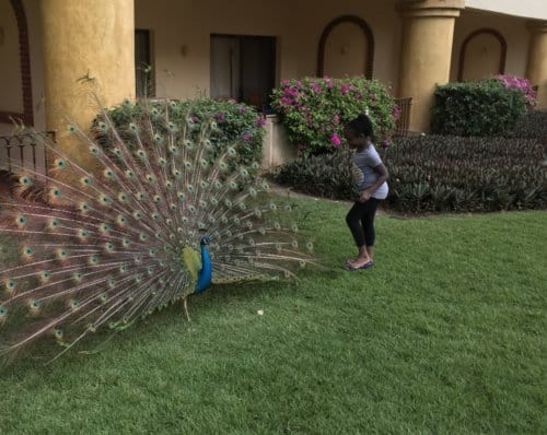 Peacock - Jalisco, Mexico with Kids