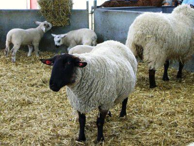 Hounslow Farm