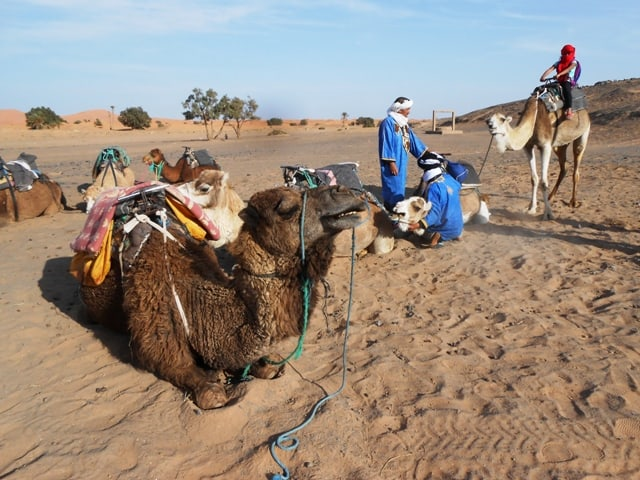 Berber Guides - Ride a Camel with Confidence