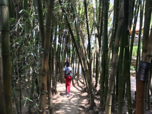 Exploring the woods - Jalisco, Mexico with Kids
