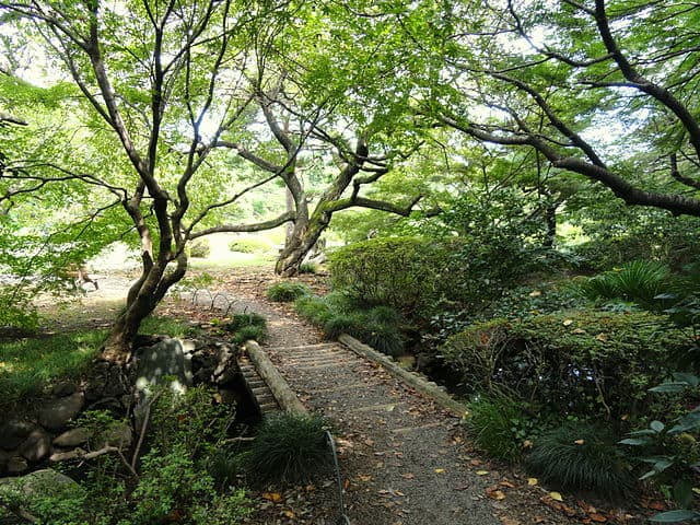 Shinjuku Gyeon National Garden - Best Things to do in Tokyo