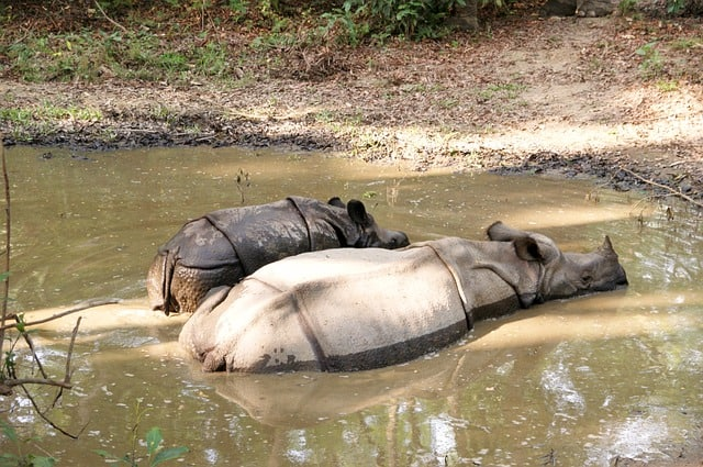Chitwan National Park - Best Things to Do in Nepal
