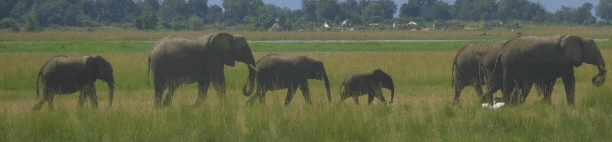 Kruger National Park - Top South African Destinations
