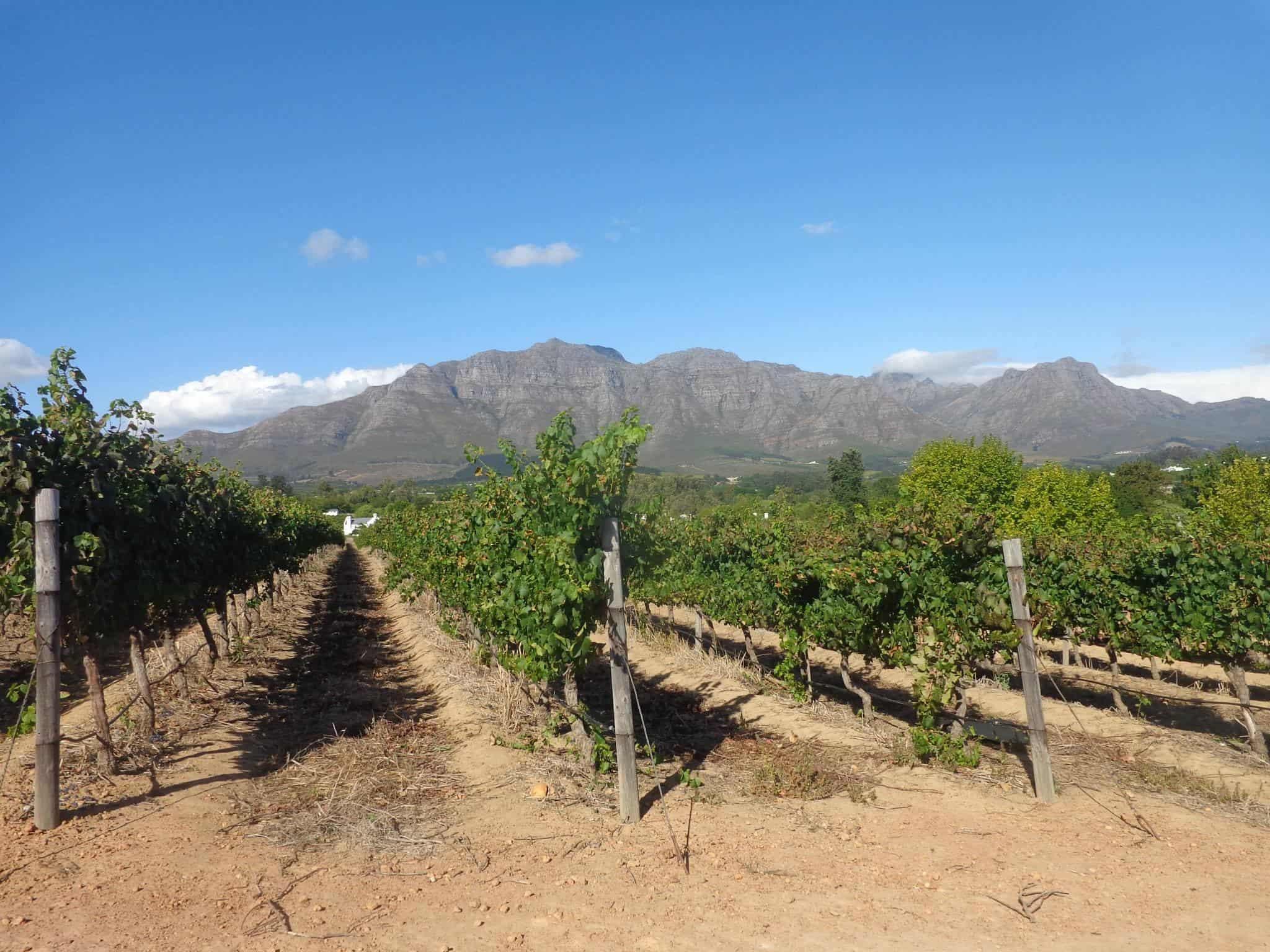 Stellenbosch - Top South African Destinations