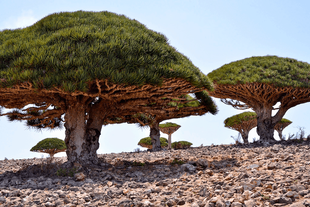 Socotra - Inhabited Places You Didn't Know Existed