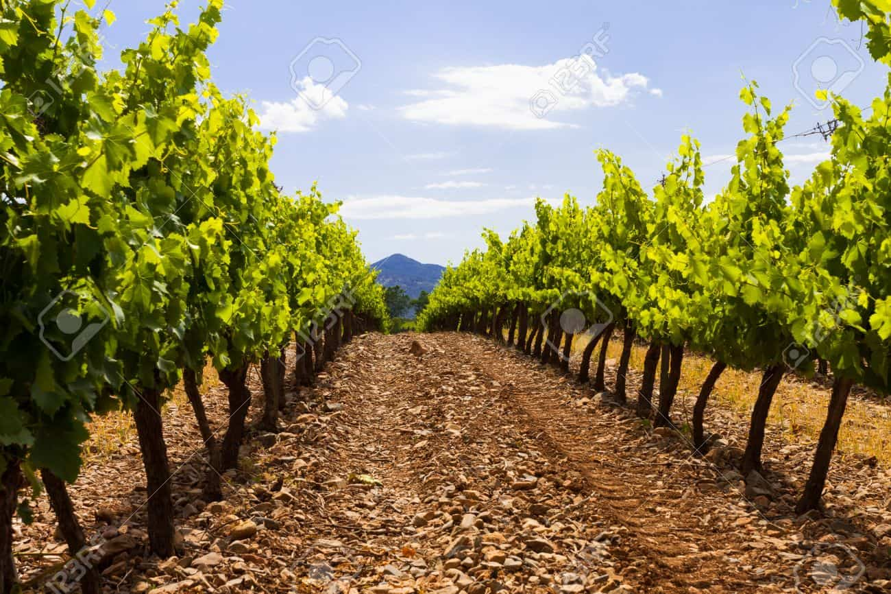 Catalonia, Spain - Most Beautiful Vineyards and Wine Regions in Europe