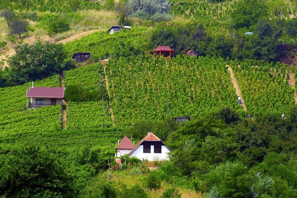 Tokaj-Hegyalja, Hungary - Most Beautiful Vineyards and Wine Regions in Europe