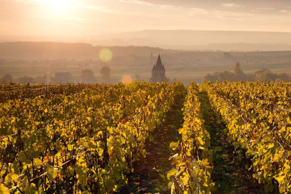 Champagne, France - Most Beautiful Vineyards and Wine Regions in Europe