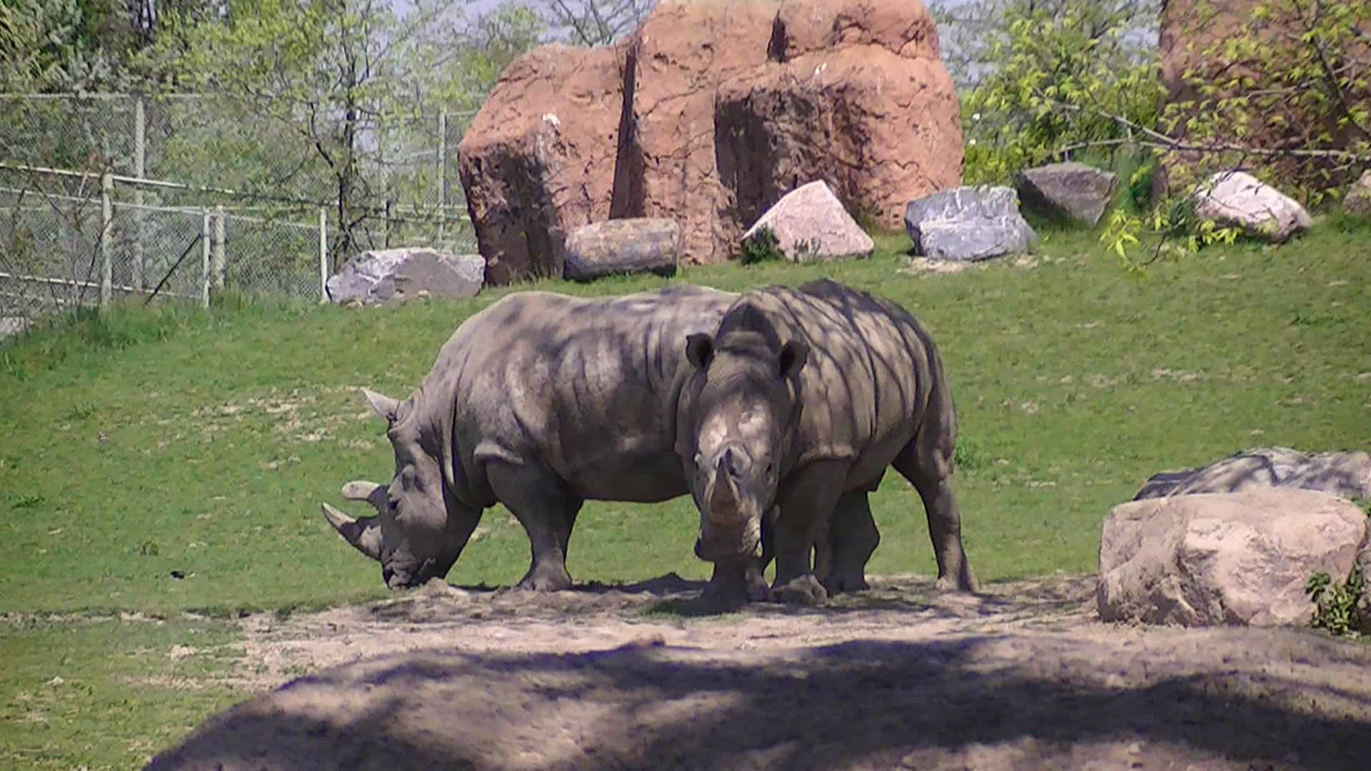 Toronto Zoo, Ontario - Best Rated Zoos in the World