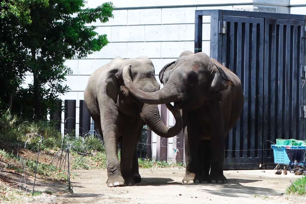 Yokohama Zoo, Japan - Best Rated Zoos in the World
