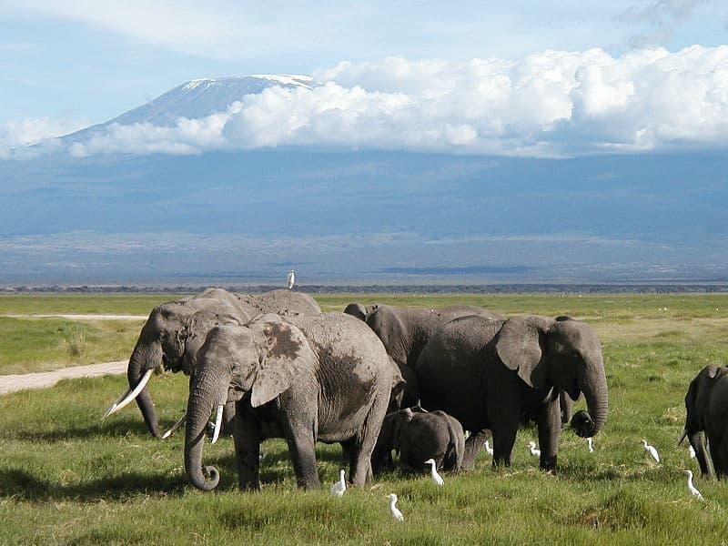 Africa's Mount Kilimanjaro
