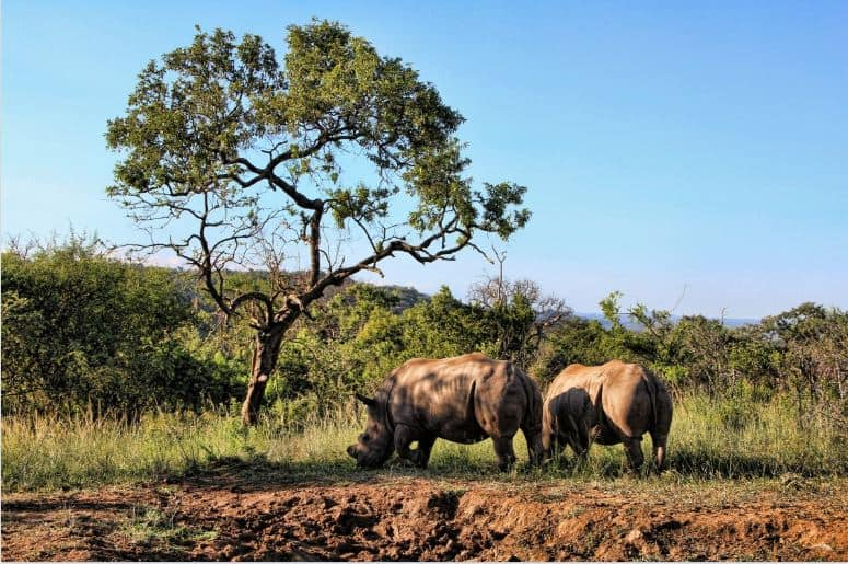 Big Five Game Reserves - Inhaca Island, Mozambique