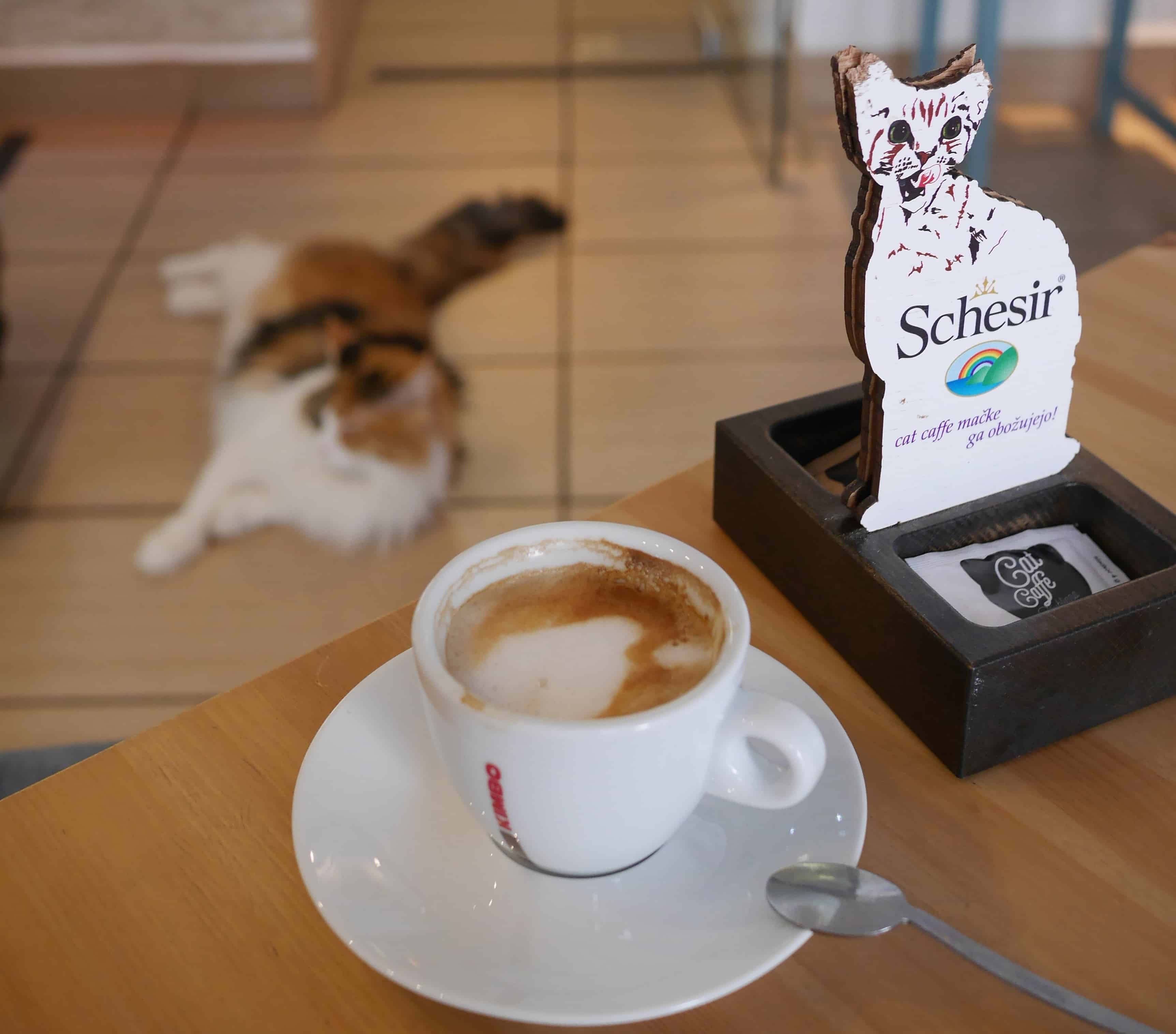 Cat Café - Top Family-friendly Places to Visit in Seoul