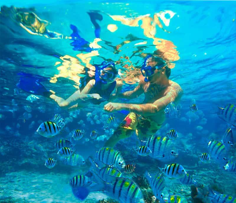 Snorkeling - Inhaca Island, Mozambique