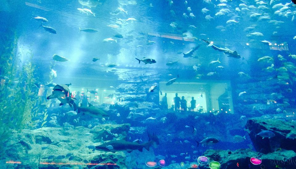 Dubai Aquarium - Dubai With Kids