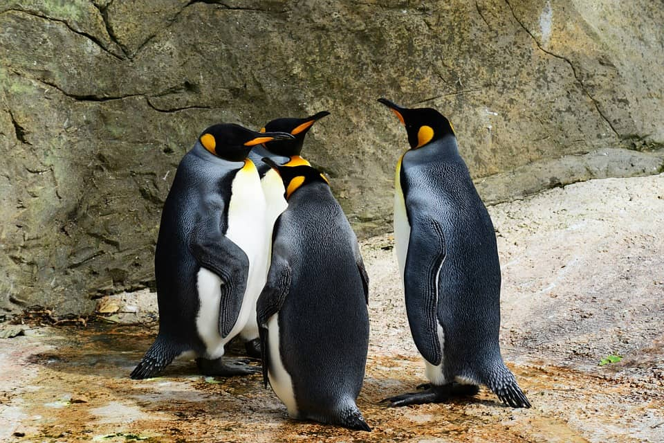Kelly Tarlton's Penguin - Best things to do in Auckland