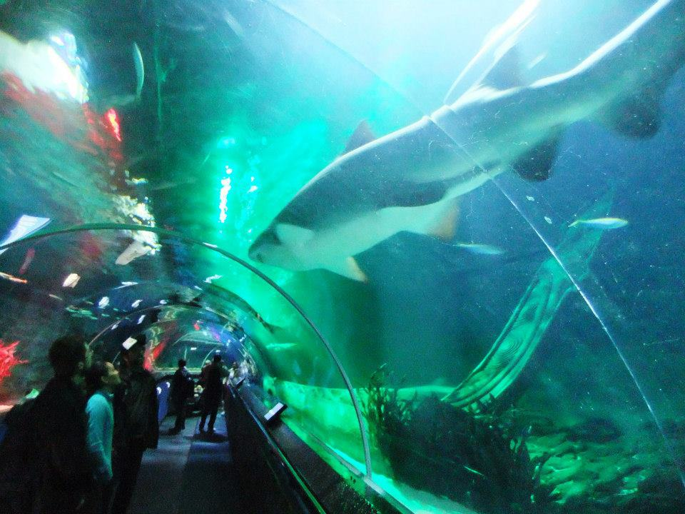 Kelly Tarlton's Sea Life Aquarium - Best things to do in Auckland