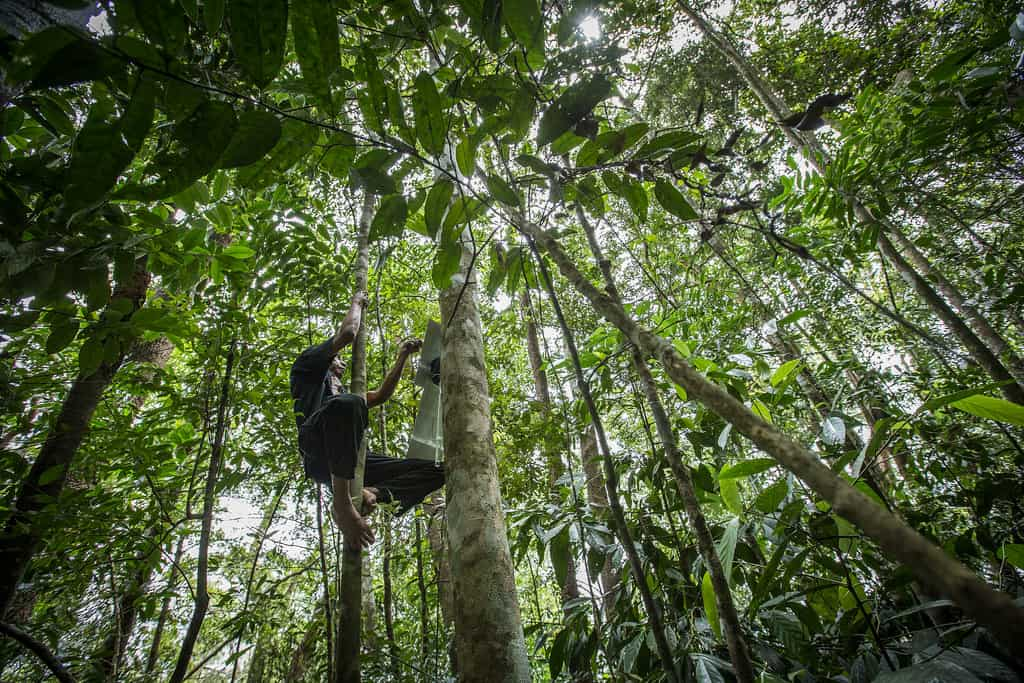 Sumatra Jungle - Best Things to Do in Indonesia