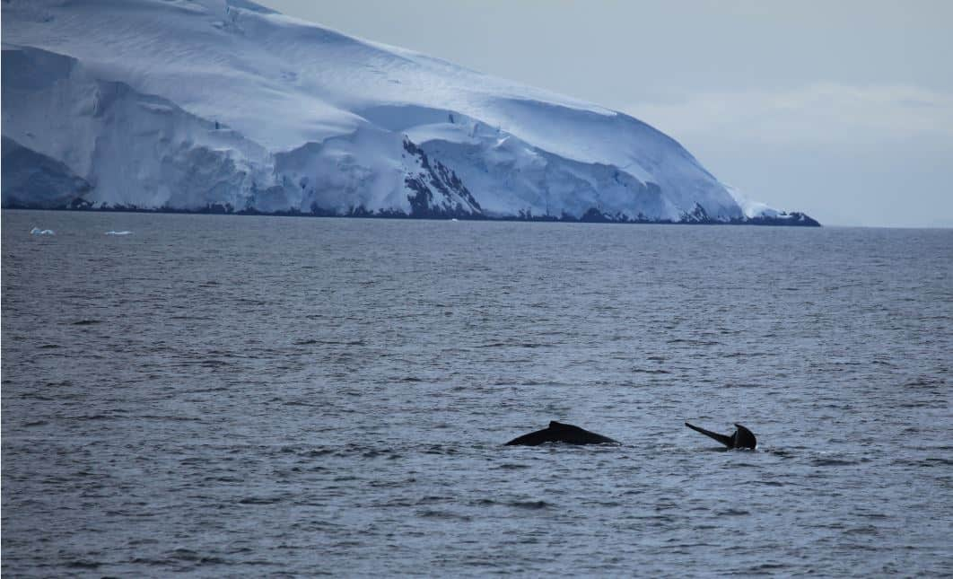 Whale Watching Antarctica - Bucket List Travel Ideas