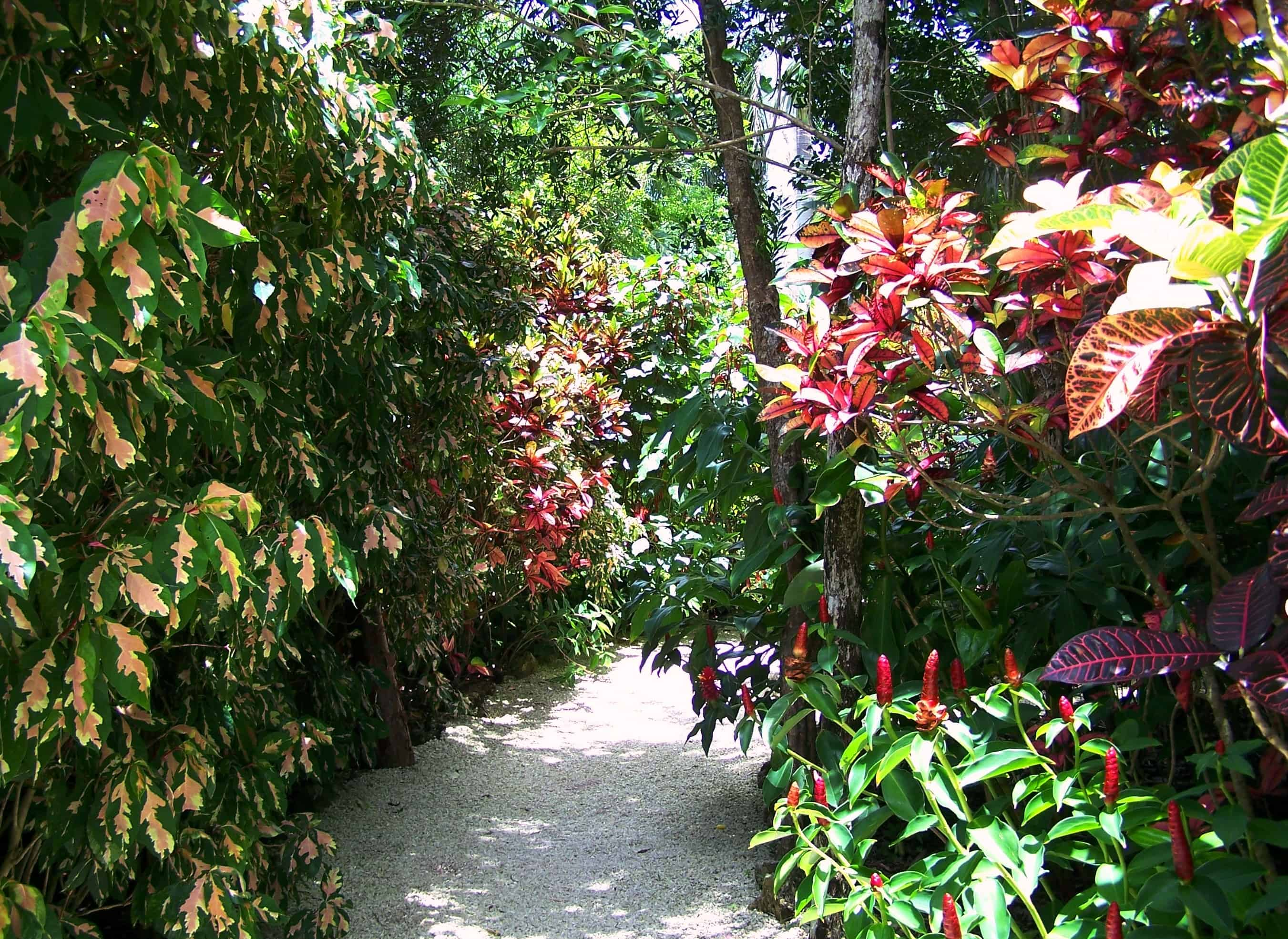 Queen Elizabeth II Botanical Park - Cayman Islands With Kids