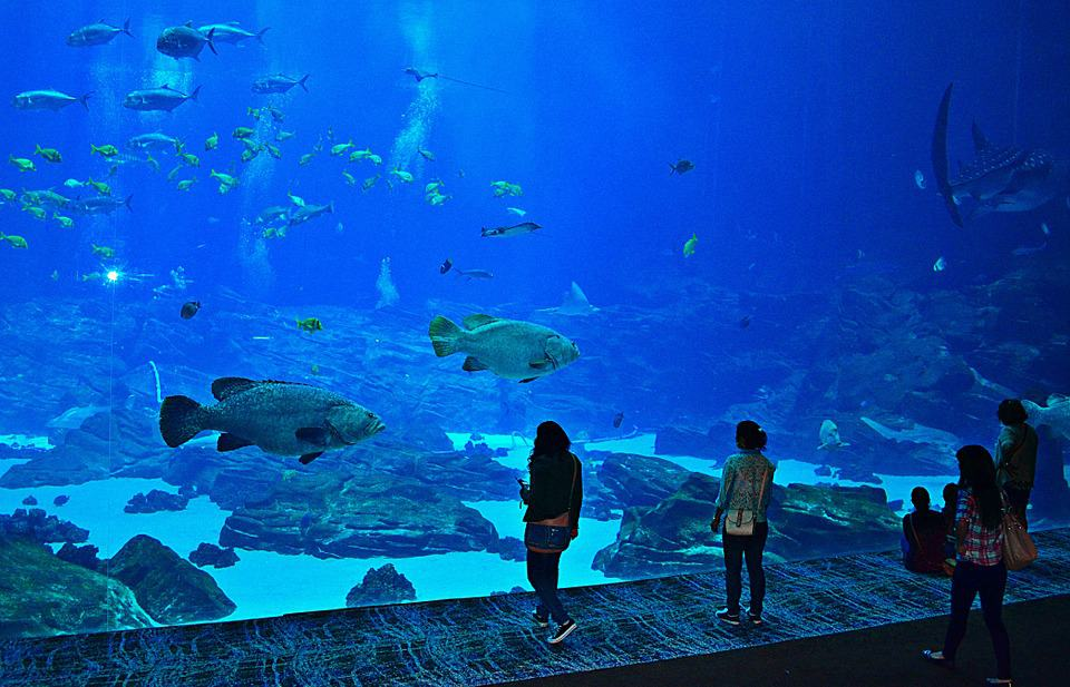 Georgia Aquarium - Best Family Vacations Spots in the USA