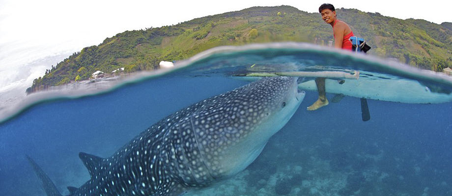 Shark Around the Boat - Best Things To Do In Cebu, Philippines