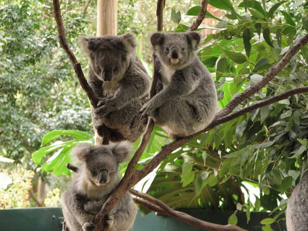 Wild Life Sydney Zoo - Best Things to Do in Sydney With Kids