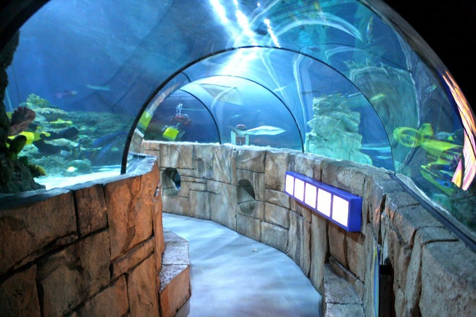 Sydney Sea Life Aquarium - Best Things to Do in Sydney With Kids