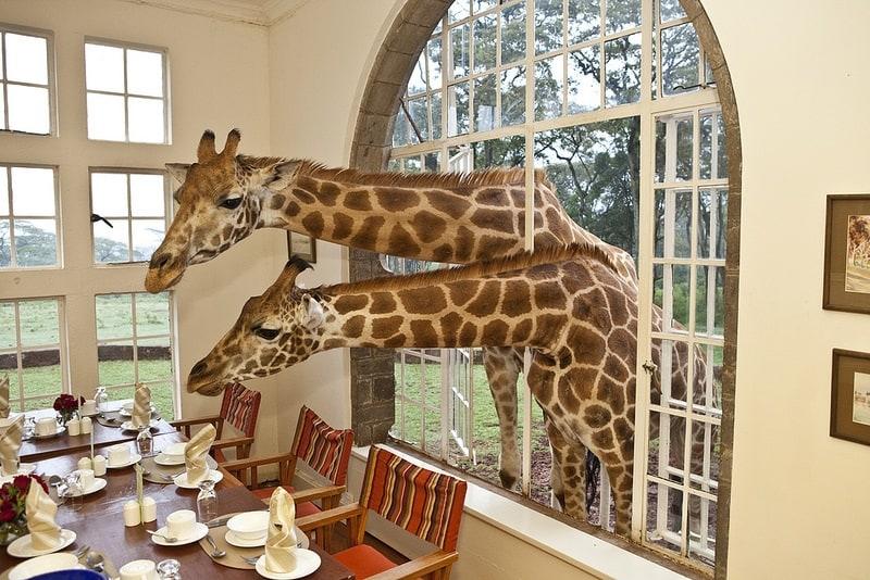 Giraffe Manor, Kenya - Unique Hotels in the World
