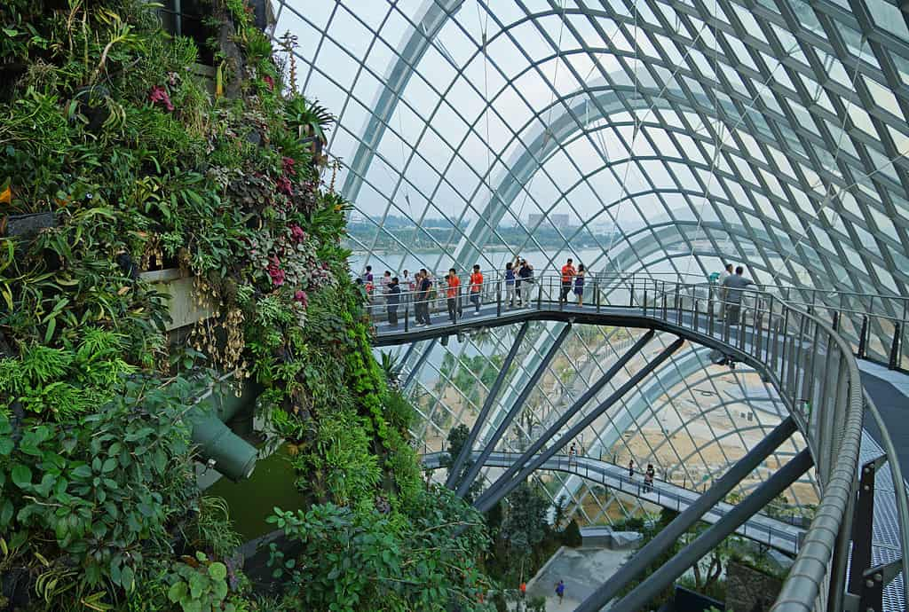 People walking on the Cloud Forest's skywalk - Singapore With Kids
