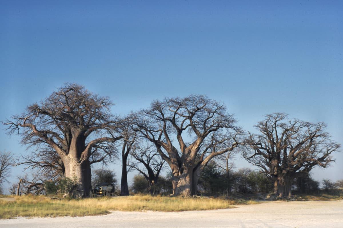 Nxai Pan National Park - Africa With Kids