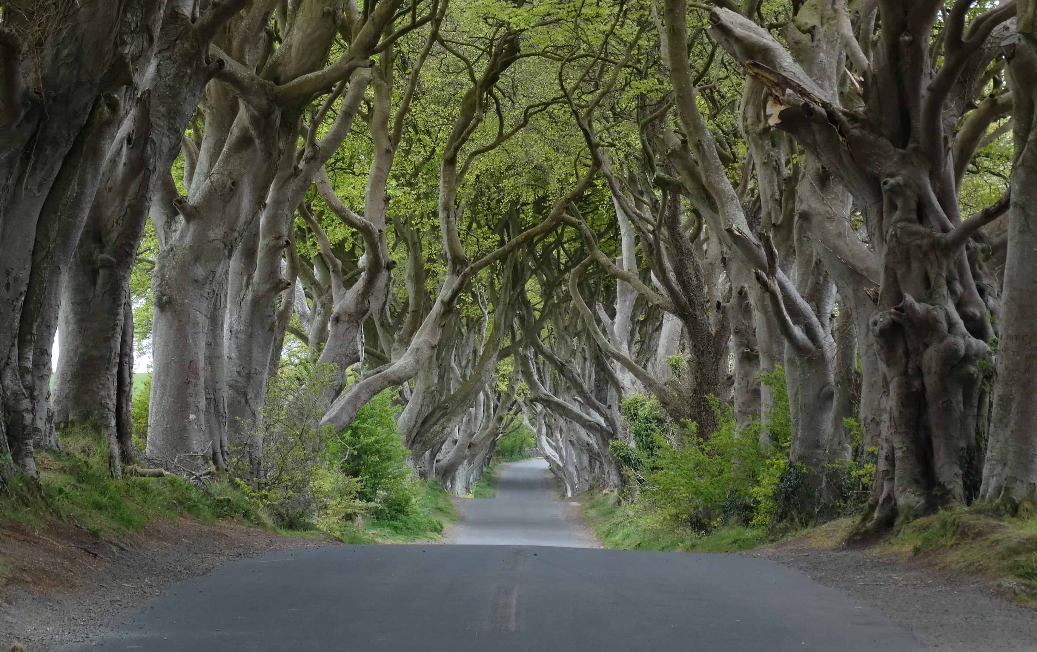 The Dark Hedges, Northern Ireland - Magical Places You Won't Believe Exist In The World