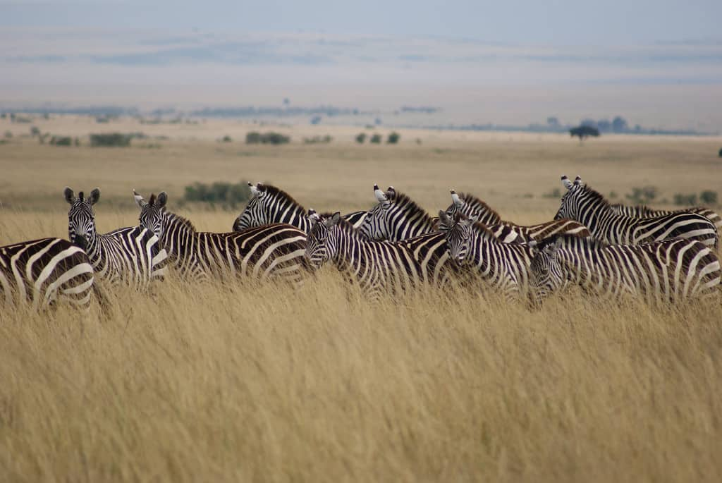 Masai Mara National Reserve - Africa With Kids