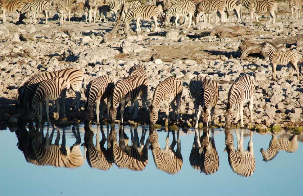 Etosha National Park - Africa With Kids
