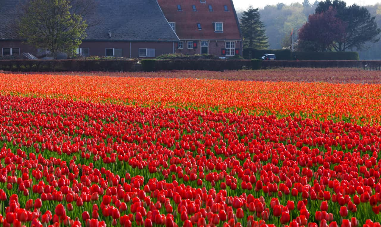 Tulip Fields, Netherlands - Magical Places You Won't Believe Exist In The World