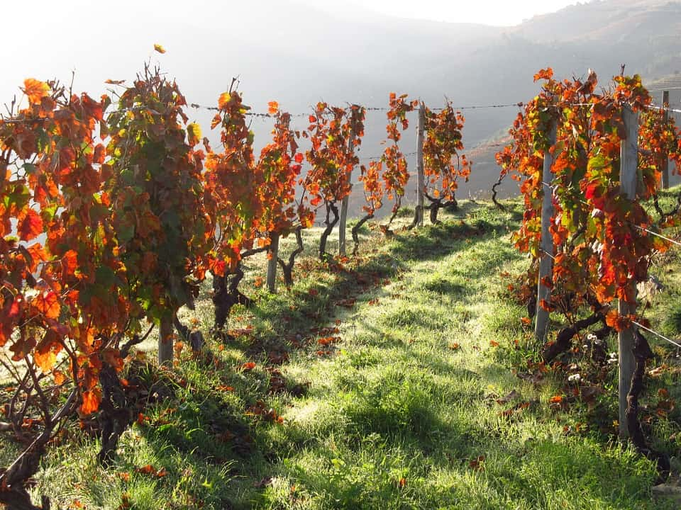 Douro Valley, Portugal - Best Places to Visit in March