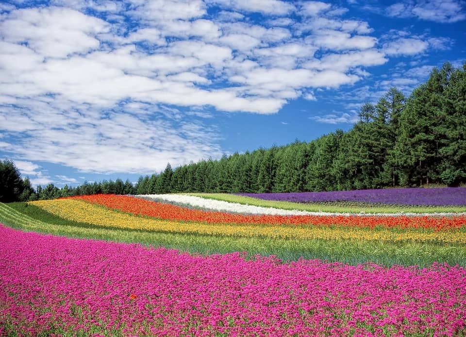 Hokkaido, Japan - Best places to visit in January