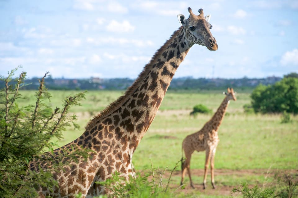 Nairobi - World's Best Cities to Visit With Family
