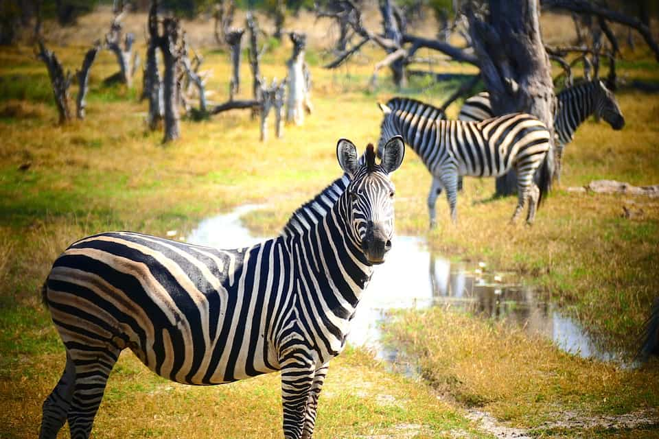 Botswana - Best Places to Visit in July