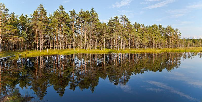 Lahemaa National Park - Best Places to Visit in Estonia