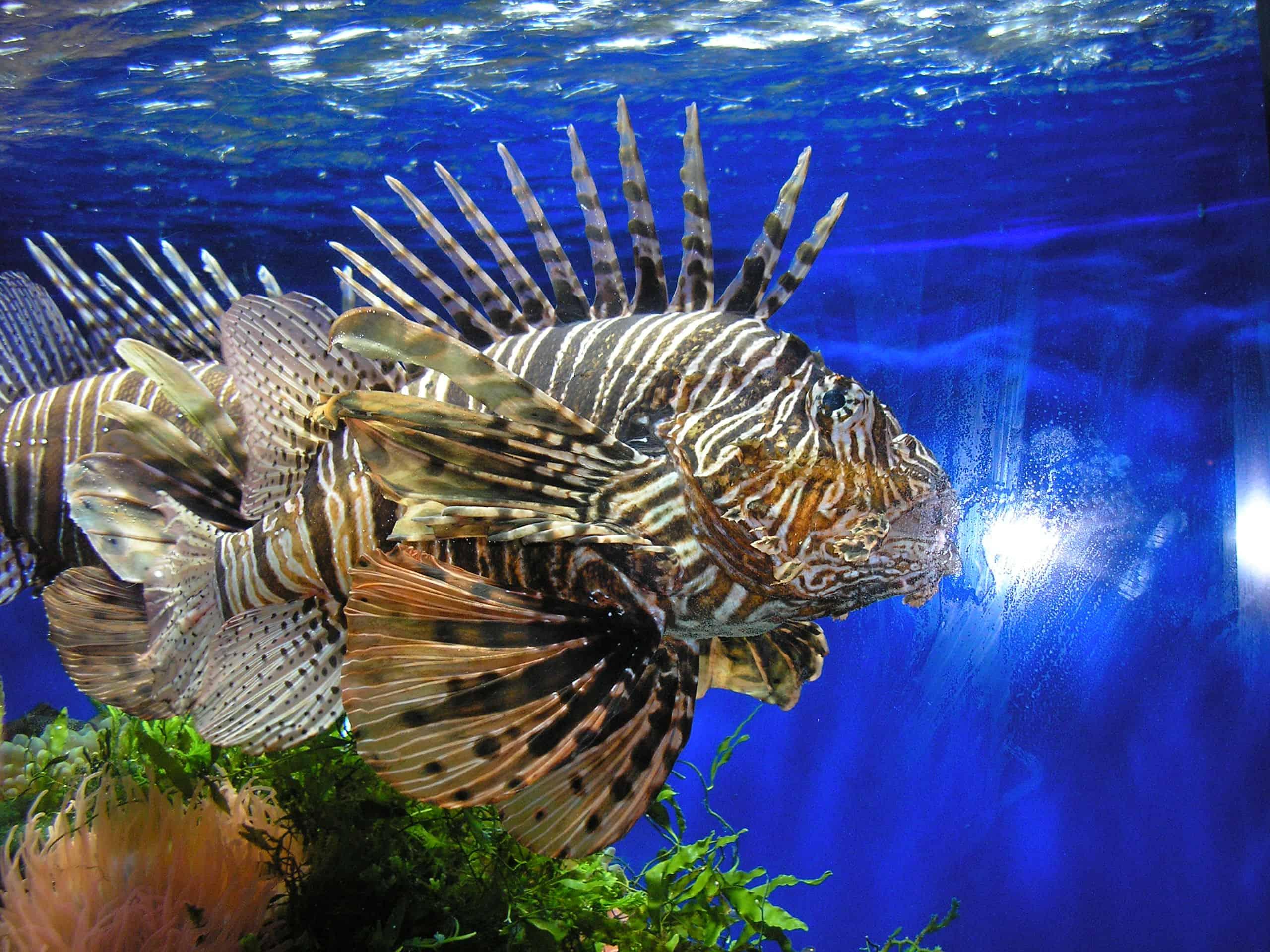 Oceanographic Museum of Monaco - Reasons to Visit Monaco