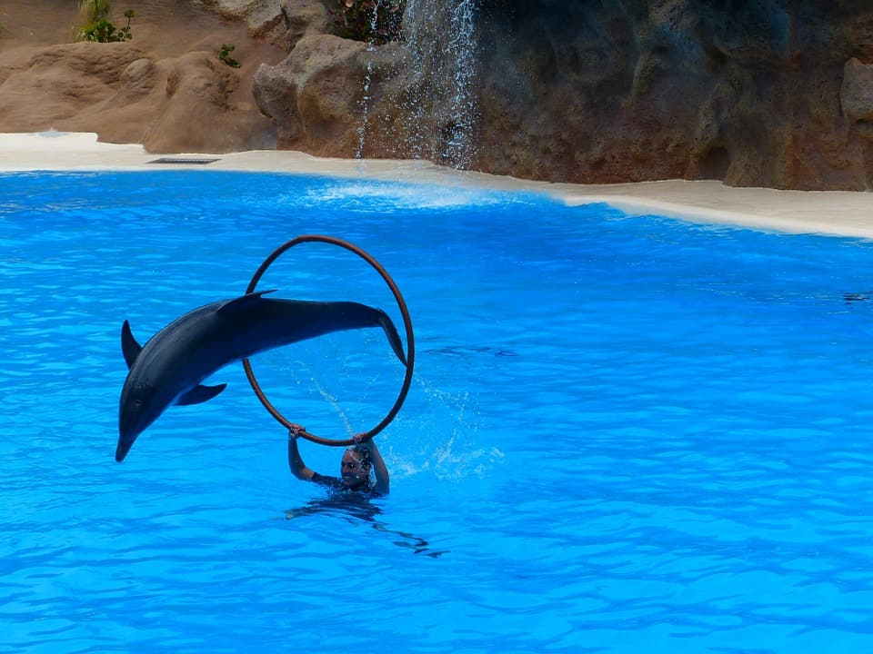 Dolphin Show at the Nemo Dolphinarium - Best Things to Do in Belarus