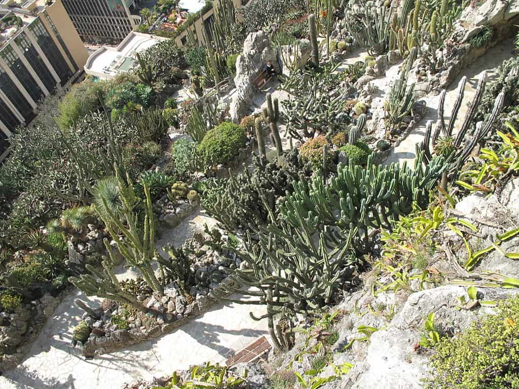 Exotic Garden - Reasons to Visit Monaco