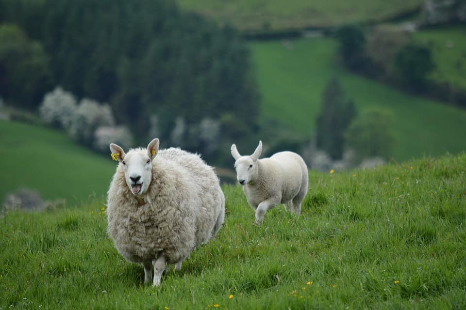 Ireland - Safest Countries to Visit With Kids