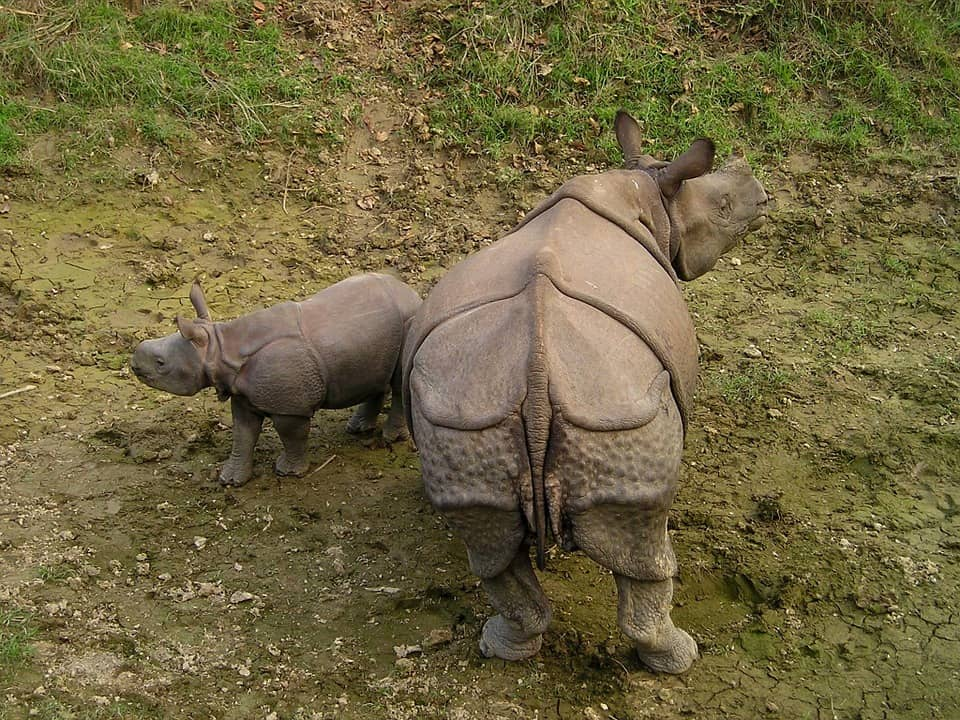 Royal Chitwan National Park - Nepal With Kids