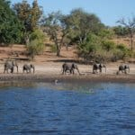 Places to Go With Kids: Botswana With Kids