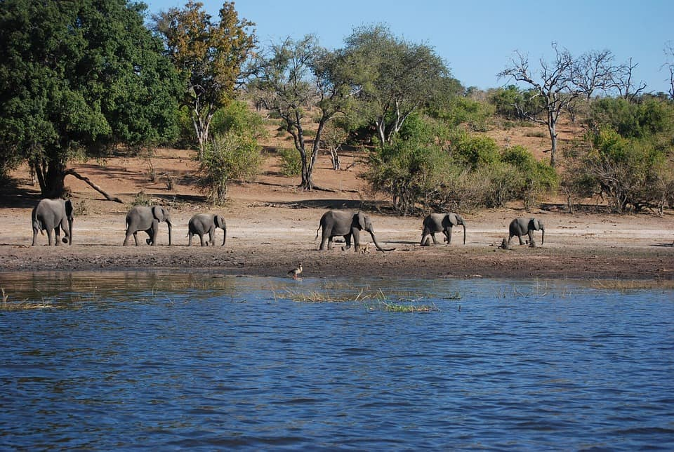 Botswana With Kids